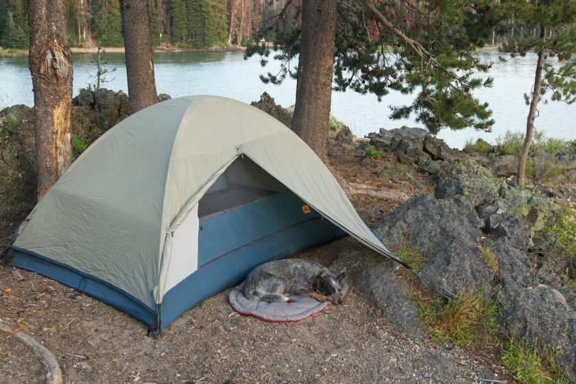 camp-dog