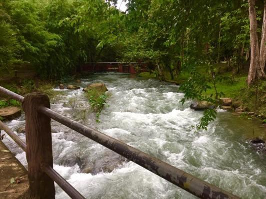 rainfor2