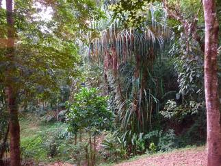 rainfor4