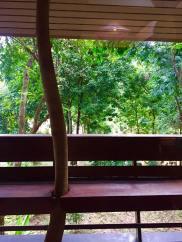 rainfor5